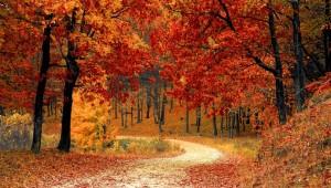 fall-autumn-red-season-crop